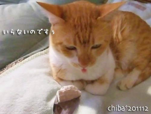 chiba11-12-135.jpg