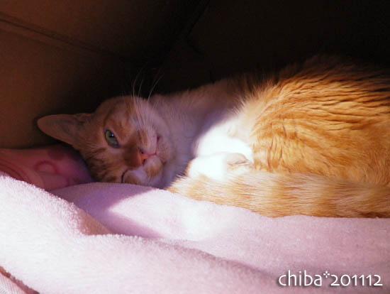 chiba11-12-140.jpg