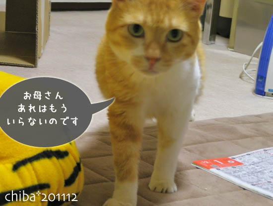 chiba11-12-15x.jpg