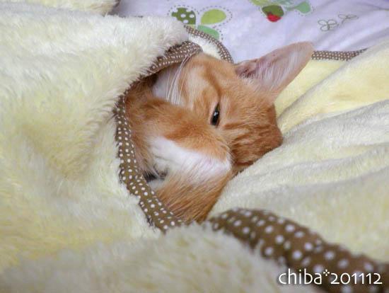 chiba11-12-200.jpg