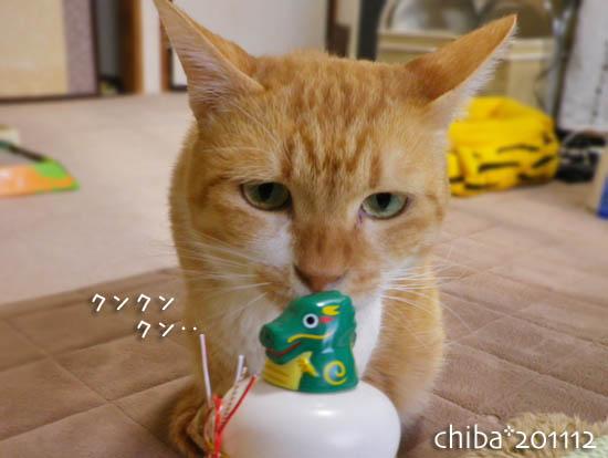 chiba11-12-206.jpg