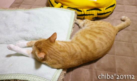 chiba11-12-6.jpg