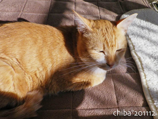 chiba11-12-73.jpg