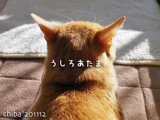 chiba11-12-76.jpg