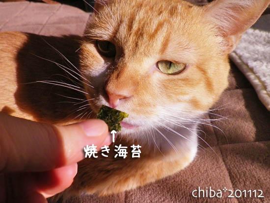 chiba11-12-78.jpg