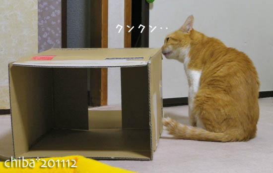 chiba11-12-9.jpg