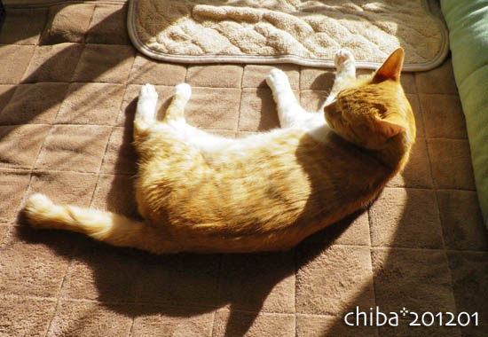 chiba12-01-141.jpg