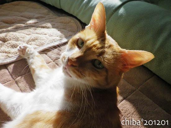 chiba12-01-142.jpg