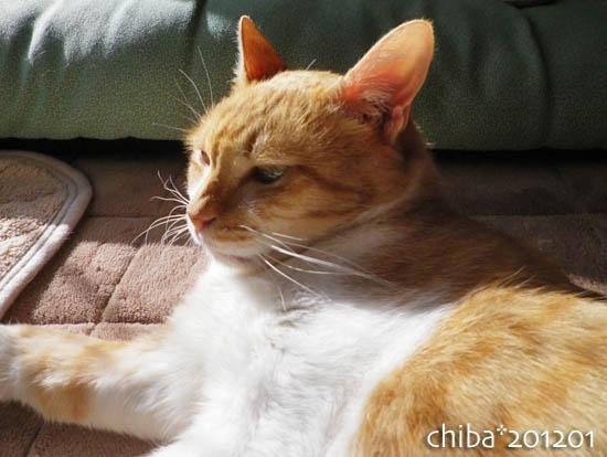 chiba12-01-143.jpg