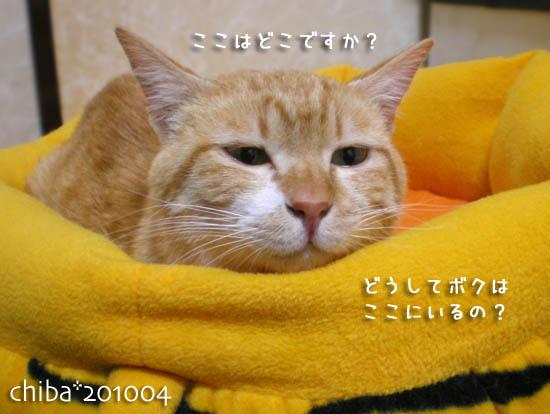 chiba12-01-154.jpg