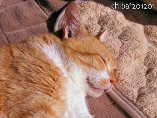 chiba12-01-30.jpg