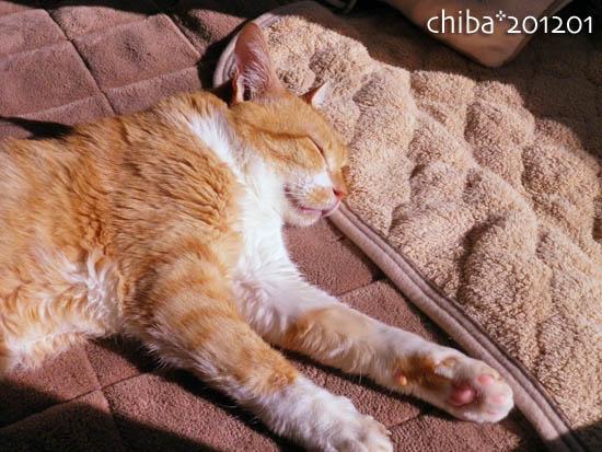 chiba12-01-32.jpg
