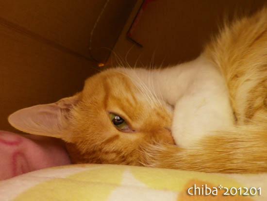 chiba12-01-53.jpg