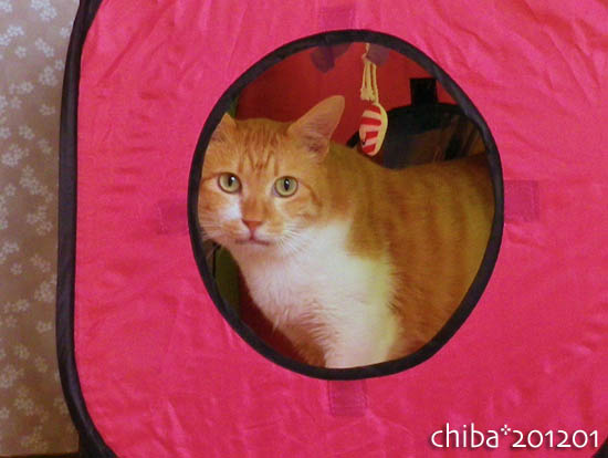 chiba12-01-86.jpg