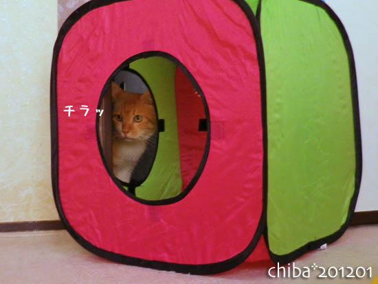 chiba12-01-87.jpg