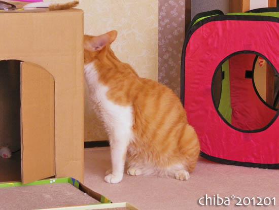 chiba12-01-92.jpg