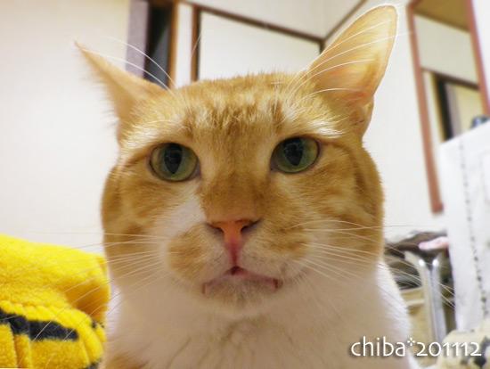 chiba14-11-28.jpg