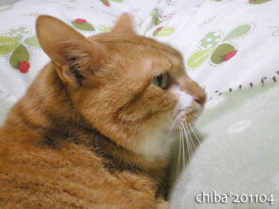 chiba14-11-37.jpg