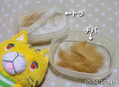 chiba14-11-42x.jpg