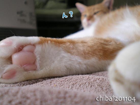 chiba14-11-51.jpg