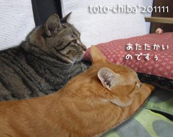 totochiba11-5.jpg