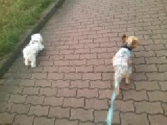1プーと散歩