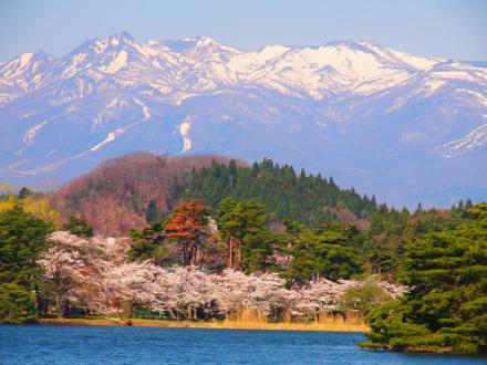 P4243188南湖の桜と那須連山
