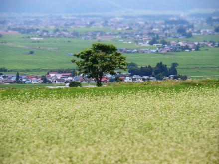 P7099944雄国のソバ畑