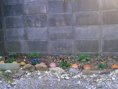 緋扇貝の貝殻