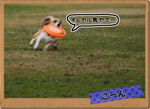 DSC09974_20120314125045s.jpg