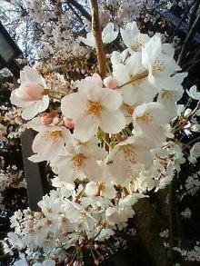 Reiko no yukue-200904050817001.jpg