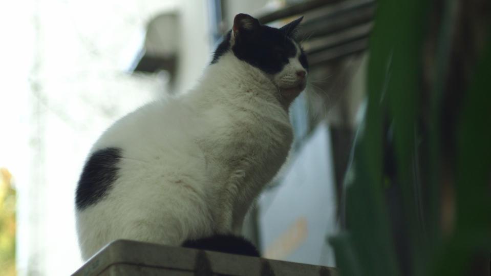 ガタイ自慢のネコ