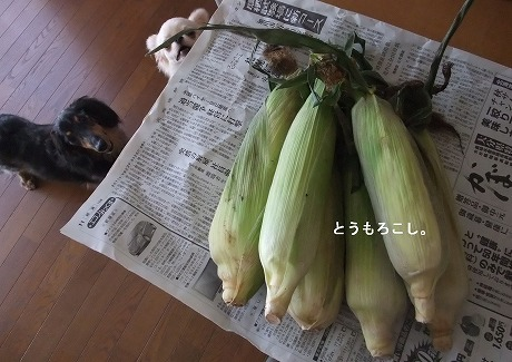 2011-09-07-05.jpg