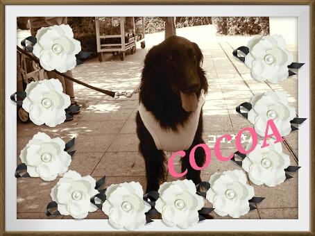 2012-11-23-10-32-02_deco.jpg