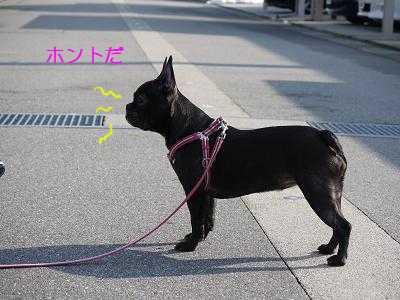 kiji_24_3_4_momo1.jpg