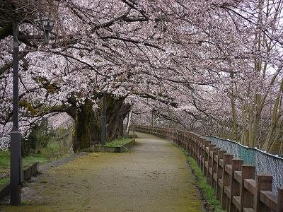 kiji_24_4_15_fuukei1.jpg