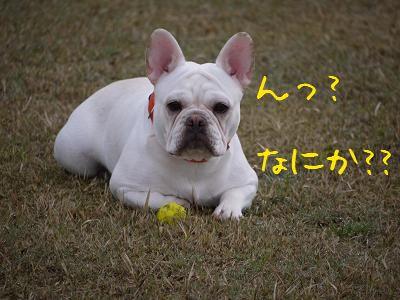kiji_24_4_15_ramu3.jpg