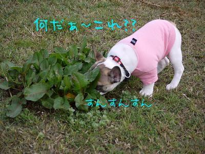 kiji_24_4_15_reo1.jpg