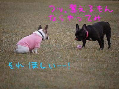 kiji_24_4_15_reo3.jpg