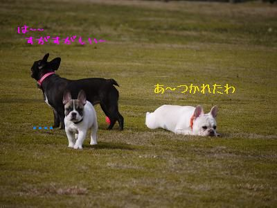 kiji_24_4_21_ramutomomotoreo1.jpg