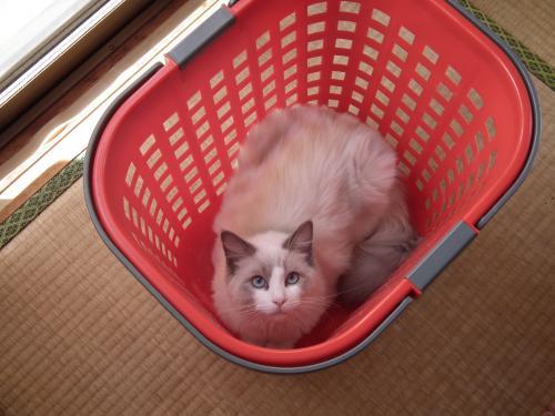 猫茶々丸+004_convert_20120415013932