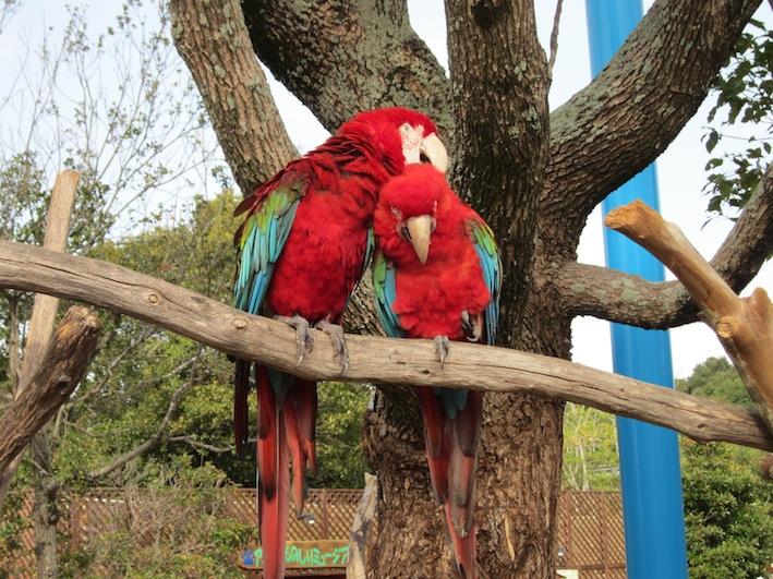 寄り添う鳥たち