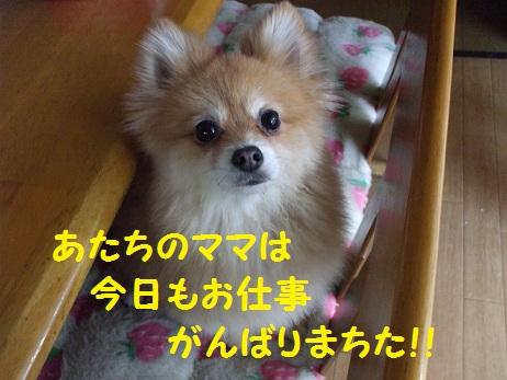 DSCF0666_20120202083714.jpg