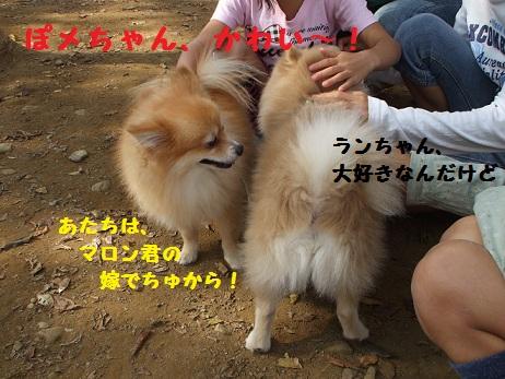 DSCF9277_20111102134808.jpg