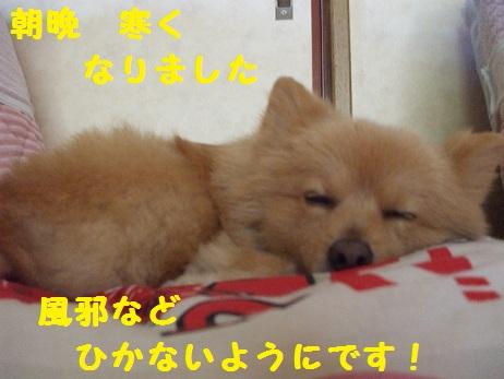 DSCF9730_20111121103225.jpg
