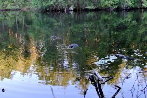 ビーバーの住む湖