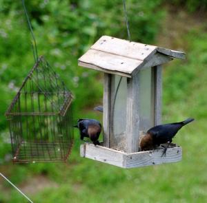 庭に遣ってくる小鳥