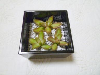 P1070161.jpg