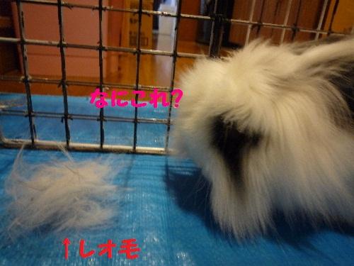 レオ毛と対面