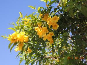 DSCN0555_convert_20120813192957.jpg